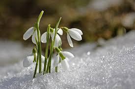 Pierwszy dzień wiosny 2021. Astronomiczna wiosna i kalendarzowa wiosna.  Kiedy pierwszy dzień? - Bydgoszcz, Super Express