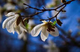 Pierwszy dzień wiosny 2021 – kalendarzowy, astronomiczny i metereologiczny  początek wiosny | Jaworznicki Portal Społecznościowy - jaw.pl | Jaworzno